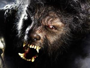 Že by konečně pořádný vlkodlak?