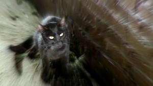 Konečně! Tady je černá kočka.
