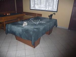 Kočka už čeká.