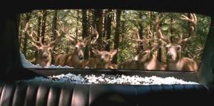 Pomsta divokých jelenů.