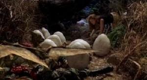 Vajíčka se líhnou.