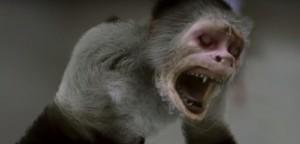 Nasraná opička.
