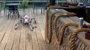 Pavouček.