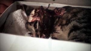 Chudák kočka...