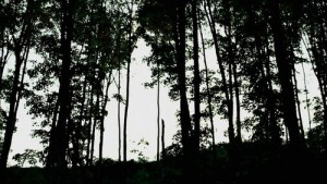 Lesy...