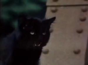 Zlá kočka!
