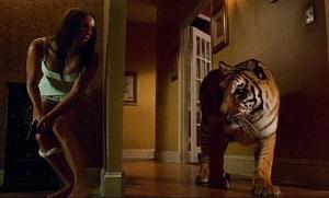 Kočička jde po ní!