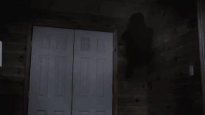 Něco leze ze dřeva.