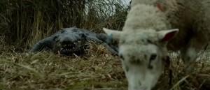 Chudák ovečka.