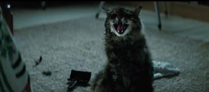 Hodná kočička?